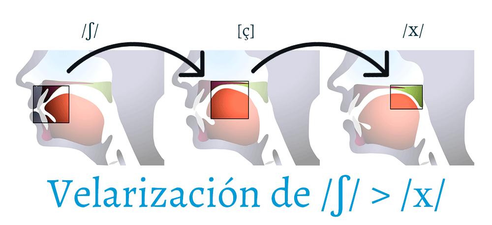 El fonema /ʃ/ va retrocediendo hasta velarizarse en /x/